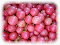 _tomato1