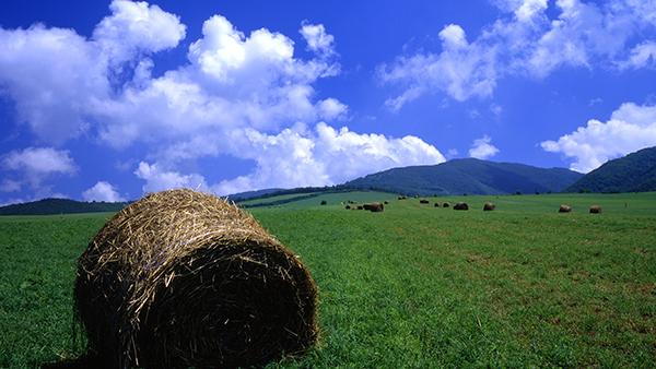 有限会社山川牧場自然牛乳